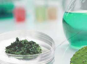 Litramina è un complesso di fibre naturali brevettato ed autorizzato derivato principalmente dall'Opuntia ficus indica,